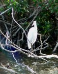 The great egret is one of the more common birds here.