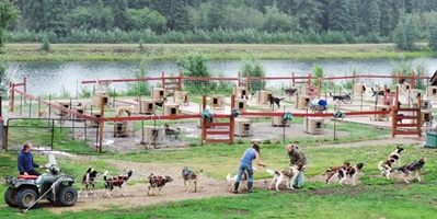 Sled dog training and breeding.