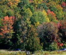 Summer's end & Canada's forests were changing to fall colors.