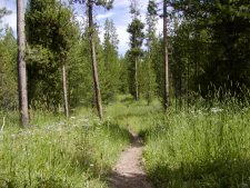 There are miles of trails through forest, medows and by lakes and streams.
