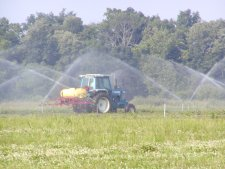 Liquid fertilizer is sprayed while sprinklers are in operation to prevent burning tree leaves.