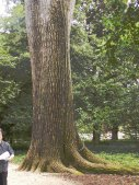 This tree is documented to have been planted by Washington in 1765.