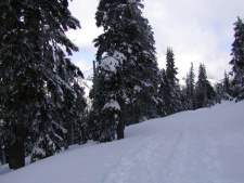 Cross country ski trail at Hurricane Ridge.