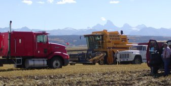 Spring wheat is harvested in Idaho in late September.